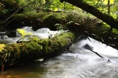 Kaskady na rzece Sopot- 6 zmysłów Roztocza