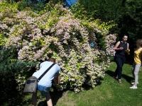 w_ogrodzie_botanicznym-2